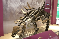 dinosaurus-1