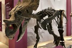 dinosaurus-3