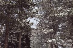 zlatibor-zima-16