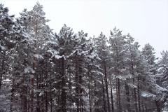 zlatibor-zima-17