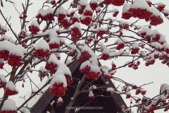 zlatibor-zima-5