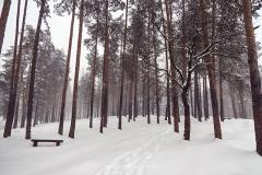 zlatibor-zima-8